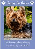 "Yorkshire Terrier-Happy Birthday - ""From The Dog"" Theme"